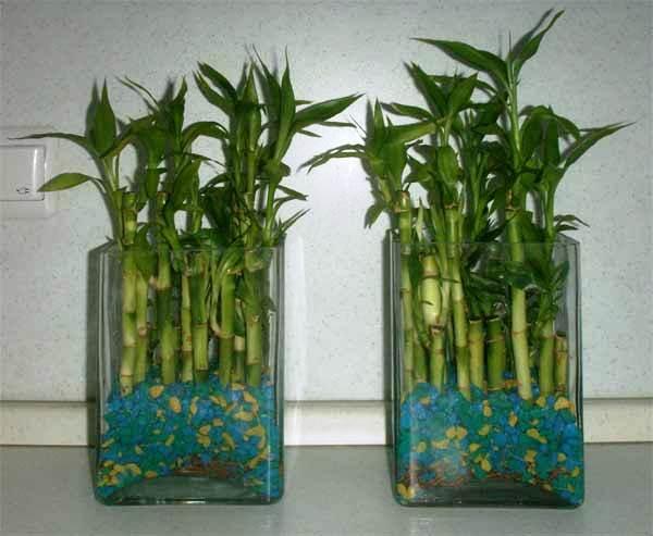 Розы в вазе дома: фото белых, красных, оранжевых цветов в высоком стеклянном сосуде с тремя бутонами, как красиво поставить на столе, важно ли правильно подрезать?