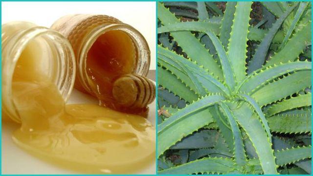 Алоэ при простуде: популярные рецепты народных средств и советы по использованию сока растения от кашля