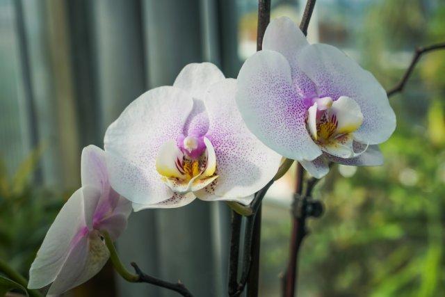 Куда поставить орхидею в квартире: какие места лучше для ее выращивания, где она должна находится возле окна, можно ли держать в кухне на холодильнике?