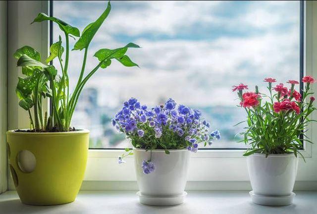 Можно ли гибискус держать дома и почему иногда нельзя, ядовит он или нет, что это за цветок, чем полезен, где его поместить в квартире и фото комнатной культуры