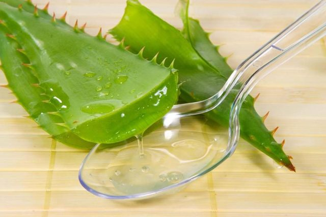 Алоэ при псориазе: польза, лечение недуга в домашних условиях при помощи растения, использование аптечных препаратов против заболевания