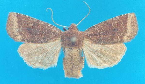 Мокрица: ракообразные ли эти членистоногие животные, ведущие наземную жизнь, какого типа, класса, отряда их представители, относятся они к насекомым или нет?