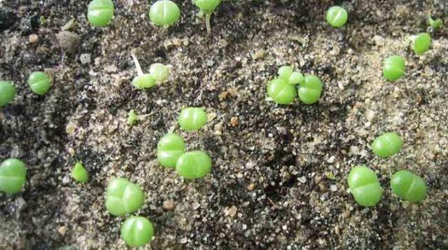Как выращивать