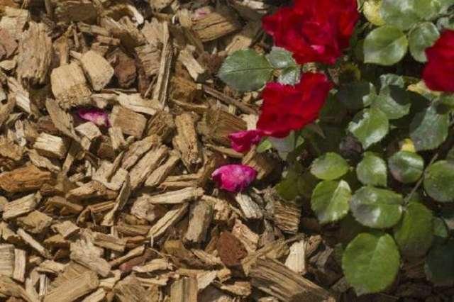 Бегония желтая: описание и фото растения, правила ухода, посадка в домашних условиях и в открытом грунте, способы размножения, болезни и вредители