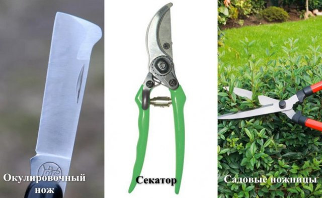 Как привить розу, в какое время проводить окулировку на шиповник – весной, летом или выбрать зимнюю процедуру, и лучше ли такие растения или корнесобственные?