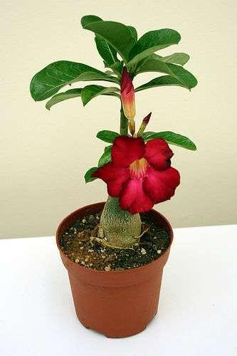 Хавортия: что это за растение из рода алоэ, описание и фото видов этого цветка похожего на кактус, а также, как ухаживать за данным суккулентом в домашних условиях?