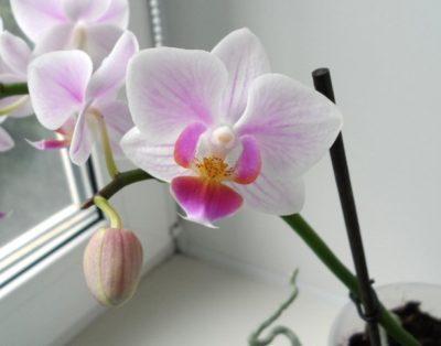 Можно ли пересаживать орхидею осенью, в том числе в октябре: особенности жизненного цикла растения в это время, а также как провести процедуру в домашних условиях
