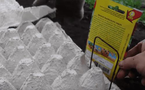 Редиска в яичных кассетах: когда выбрать этот способ выращивания, и инструкция по посадке в тару из-под яиц, уход за растениями, сбор урожая и возможные проблемы