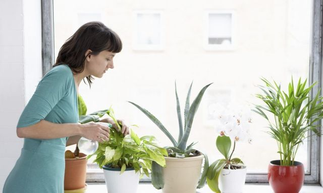 Опрыскивание орхидей: что это такое, нужно ли сбрызгивать водой растение, когда и как часто можно это делать, а также нюансы проведения в домашних условиях