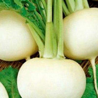 Черная редька: выращивание в открытом грунте и теплице, особенности и агротехника культивирования, выбор сорта, пошаговая инструкция, как вырастить овощ