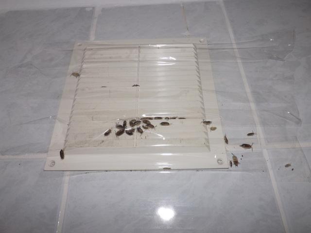 Чем питаются мокрицы в частном доме, квартире, ванной и других местах, а также можно ли отравить ракообразных и кто в живой природе их ест?