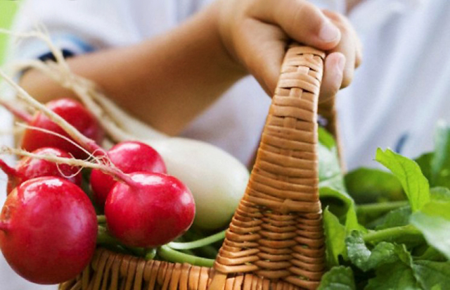 Редиска для организма женщины: польза и вред для здоровья и что содержит, как употреблять, где применяется, полезна ли для похудения?