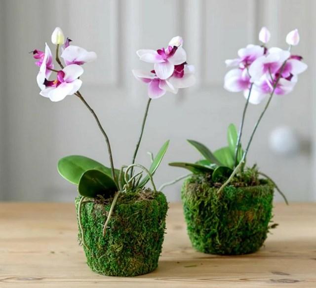 Пересадить орхидею когда она выпустила стрелку: можно ли переместить в другой горшок сразу после цветения, а также как это правильно сделать в домашних условиях?