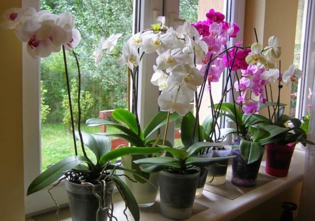 Обрезать орхидею: как правильно в домашних условиях и когда, нужно ли это делать, как осуществляется уход за растением после процедуры и обрабатывается срез?