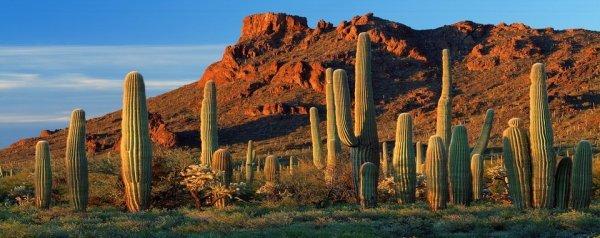 Кактус в пустыне: виды, названия и фото цветов, которые растут при засухе, а также как и почему они выживают в таких условиях?