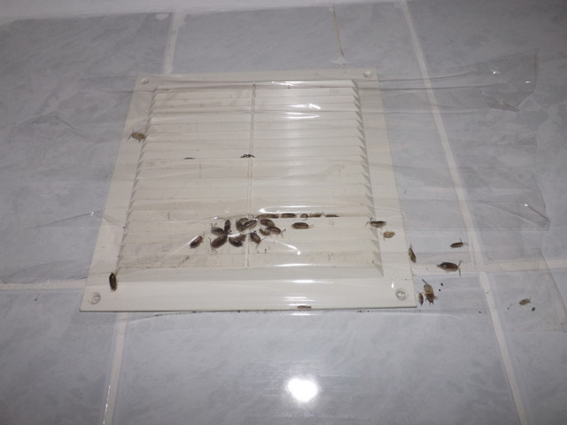 Откуда берутся мокрицы в квартире, где обитают, в какой среде, от чего заводятся в доме, каковы их любимые места, почему появляются в ванной, как от них избавиться?
