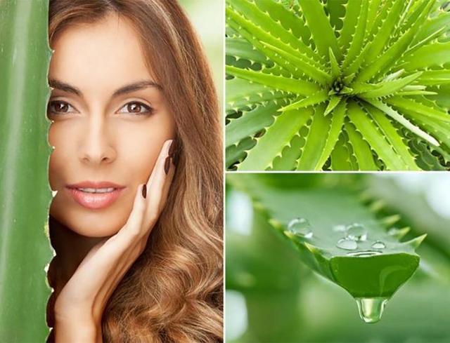 Алоэ вера для волос: польза и рецепты приготовления масок в домашних условиях, применение масла растения
