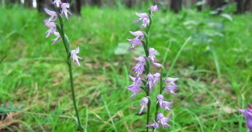 Орхидеи в природе: все про них, где и какие виды обитают, фото, как дикие цветы растут на деревьях, отличия от домашних
