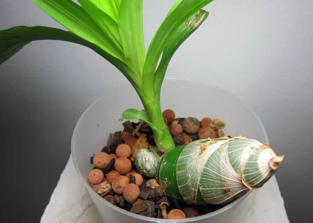 Уход за орхидеей в домашних условиях для новичков, а именно практическое руководство по правильному выращиванию этого комнатного цветка с фото и названиями видов