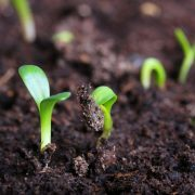 Как спасти орхидею, если корни высохли и листья желтеют: почему так происходит и что нужно делать, чтобы восстановить растение?