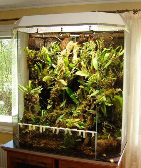 Орхидея дракула: как ухаживать за цветком, каковы правила высадки  в домашних условиях, фото растения
