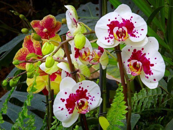 Витамины для орхидей: что входит в состав коктейля при приготовлении в домашних условиях из полезных компонентов группы b?
