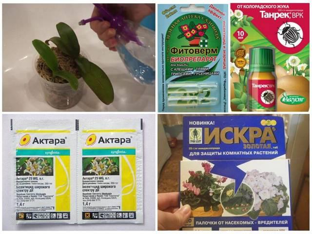Как избавиться от тли на орхидеях: фото насекомых, а также что делать и чем обработать, чтобы бороться с ней в домашних условиях?