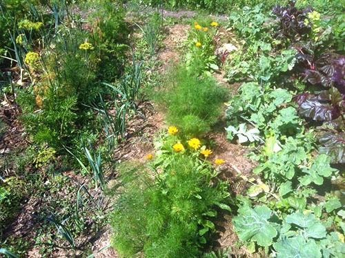 Как избавиться от тли: средства и препараты для борьбы с вредителем, обработка огорода и садового участка, а также какие меры нужны, если заражен укроп, как вывести?