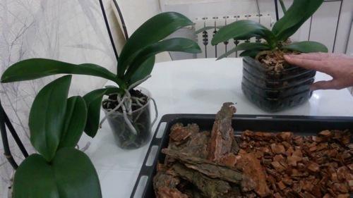 Кора для орхидей: из каких деревьев лучше брать (из сосны или ели), подготовка и обработка материала для посадки своими руками в домашних условиях
