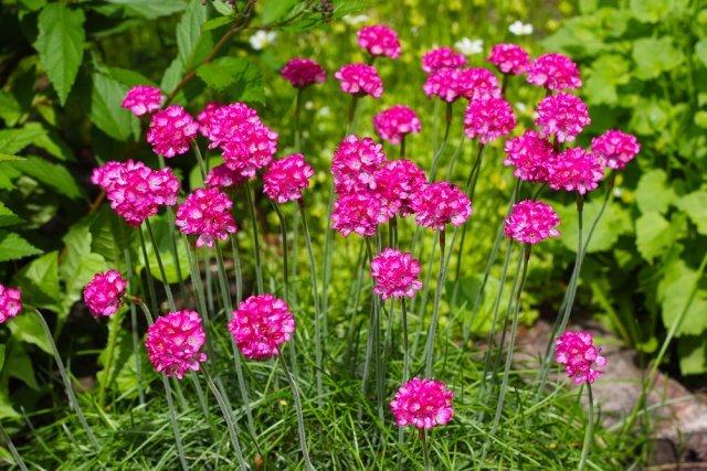 Уличные розы: описание разновидностей, включая растения в форме дерева и многолетники, правила размножения и ухода, фото цветов