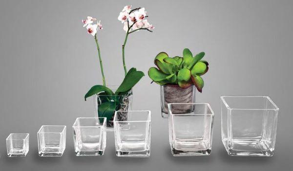 Пересадить орхидею в другой горшок: как это сделать правильно в домашних условиях, нужен ли вазон побольше, можно ли поместить в непрозрачное кашпо?
