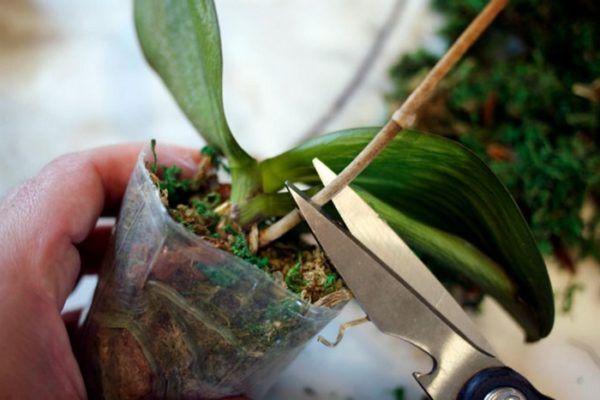 Болезни орхидей: грибковые, вирусные и иные, их описание и фото, а также как бороться с гнилью корней и белым налетом и что делать для лечения в домашних условиях