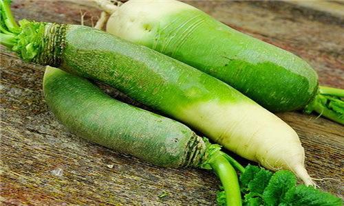 Зеленая редька: полезные свойства, противопоказания и в чем польза для здоровья, в том числе мужчин, какой вред для организма человека, лучше ли этот сорт черного?