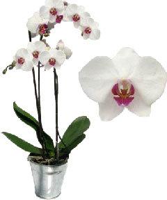 Паспорт растения орхидея: что это такое, назначение и содержание, технология оформления документа для этого комнатного цветка, источники данных