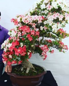 Азалия: что это за такое комнатное растение, как выглядит цветок рододендрона, описание и фото, а также способы посадки, ухода и размножения в домашних условиях