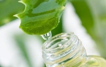 Алоэ от прыщей: помогают ли листья и сок цветка избавиться от них на коже лица, в том числе и от пятен, как использовать столетник в рецептах?