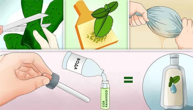 Каланхоэ от насморка: фото растения, способы применения его сока в лечебных целях, противопоказания