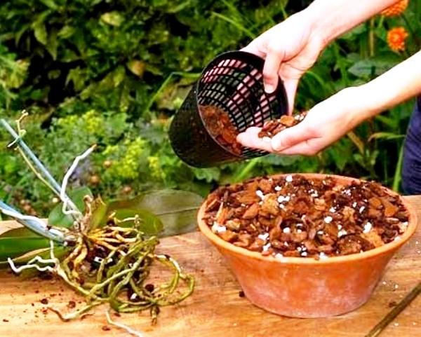 Пересадка орхидеи после покупки: нужно ли это принесенному из магазина растению, когда и как правильно провести в домашних условиях, а также последующий уход