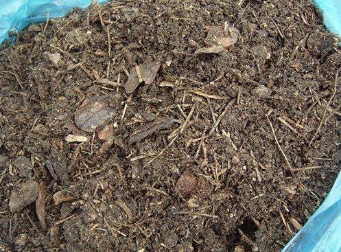 Посадка дайкона семенами в открытый грунт и в теплице: в какие сроки сажать редьку и как обеспечить правильный уход за сортами Миноваси, Саша и иными?