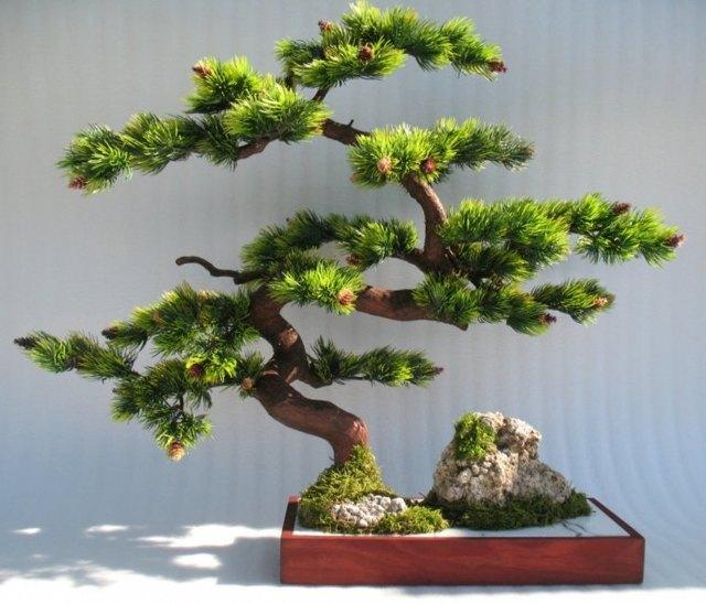 Бонсай из азалии: с чего начать и как сделать своими руками мини-дерево из обычного рододендрона, как вырастить его из семян и какой уход нужен в домашних условиях?
