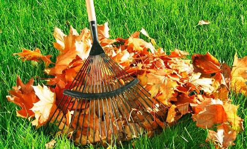 Тля и народные средства борьбы: как избавиться в саду, на огороде и на комнатных цветах, и методы на основе горчицы, нашатырного спирта, золы, хозяйственного мыла