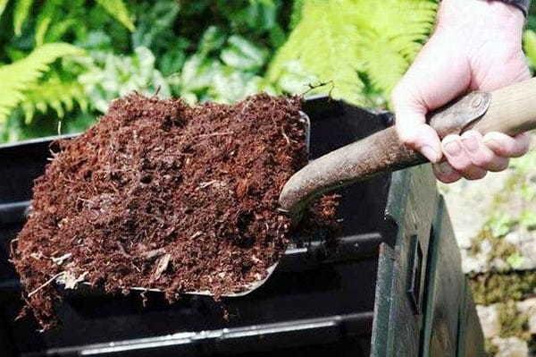 Как поливать бальзамин и чем его подкармливать для обильного цветения: когда вносить удобрения в домашних условиях и какие именно?