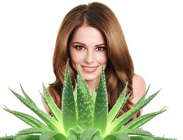 Алоэ в косметологии: применение экстракта цветка, как использовать свойства сока и листьев растения в лечебных целях, как сделать мазь в домашних условиях?