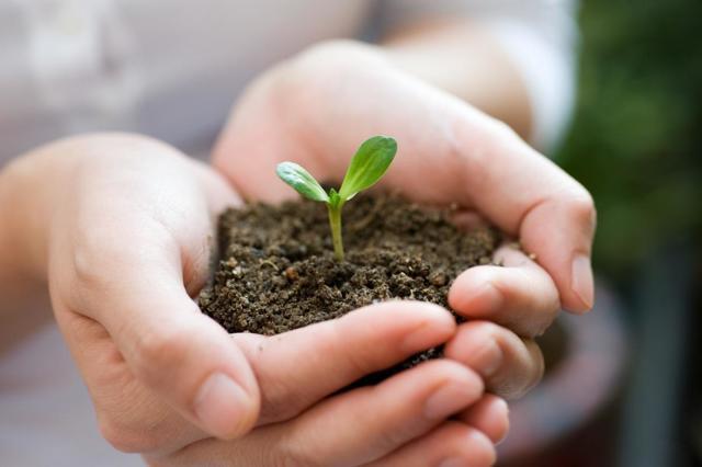 Грунт для сансевиерии: какая земля нужна для выращивания, можно ли использовать готовую почву из магазина и как за ней ухаживать?