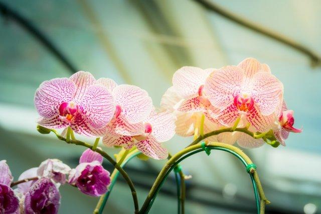 Как выбрать орхидею при покупке в магазине, на какой цветок следует обратить внимание?