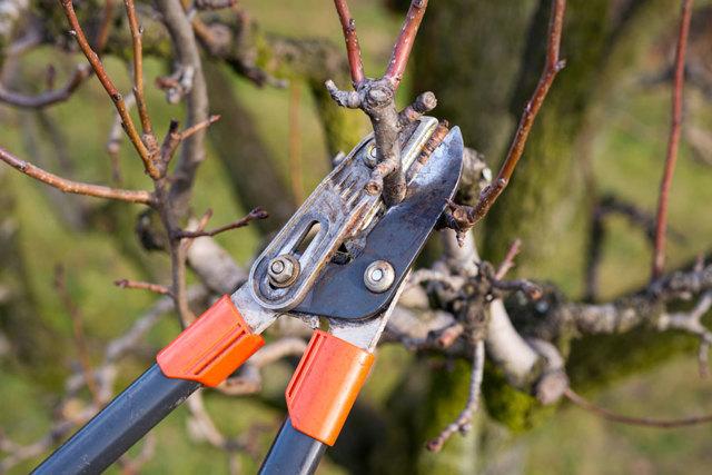 Уход за рододендроном осенью: что нужно делать для подготовки к этому времени года, можно ли совершать обрезку азалии, когда вносить удобрения?