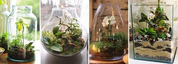 Как пересаживать орхидею в домашних условиях: пошаговая инструкция с фото, когда можно и нужно это делать, во что правильно разместить цветок с землей?