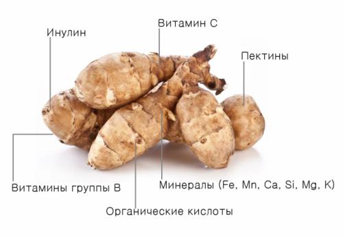 Лечебные свойства топинамбура и его применение в народной медицине: от чего помогает целебное растение, какие рецепты есть для суставов?