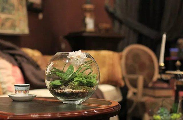 Орхидея в стеклянной вазе: горшок из стекла для посадки цветка, как производить выращивание, а также требования к сосуду, правильный уход и фото растения