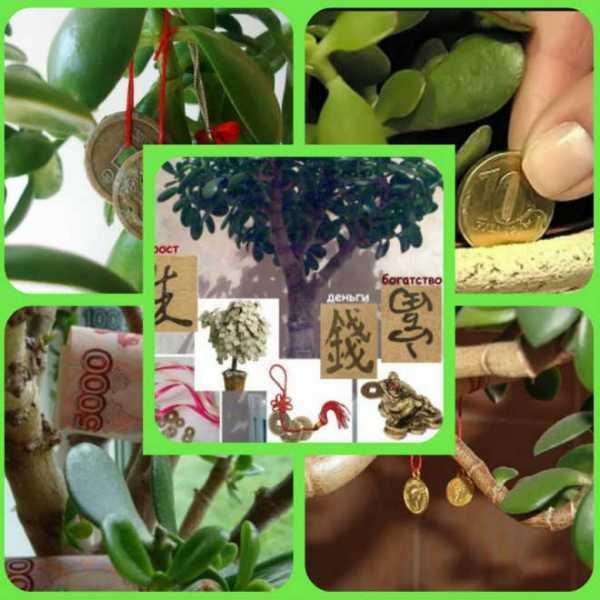 Где денежное дерево должно стоять в квартире, можно ли держать цветок в спальне на подоконнике или нет, а также куда лучше расположить толстянку в доме на даче?